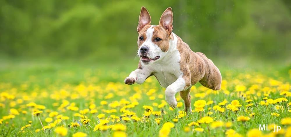 犬に良くある股関節の問題 飼い主が知っておくべきこと Pet Care